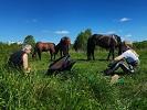 Лошади - Наше лето