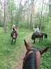 Верховая езда / Конный спорт - Все вместе